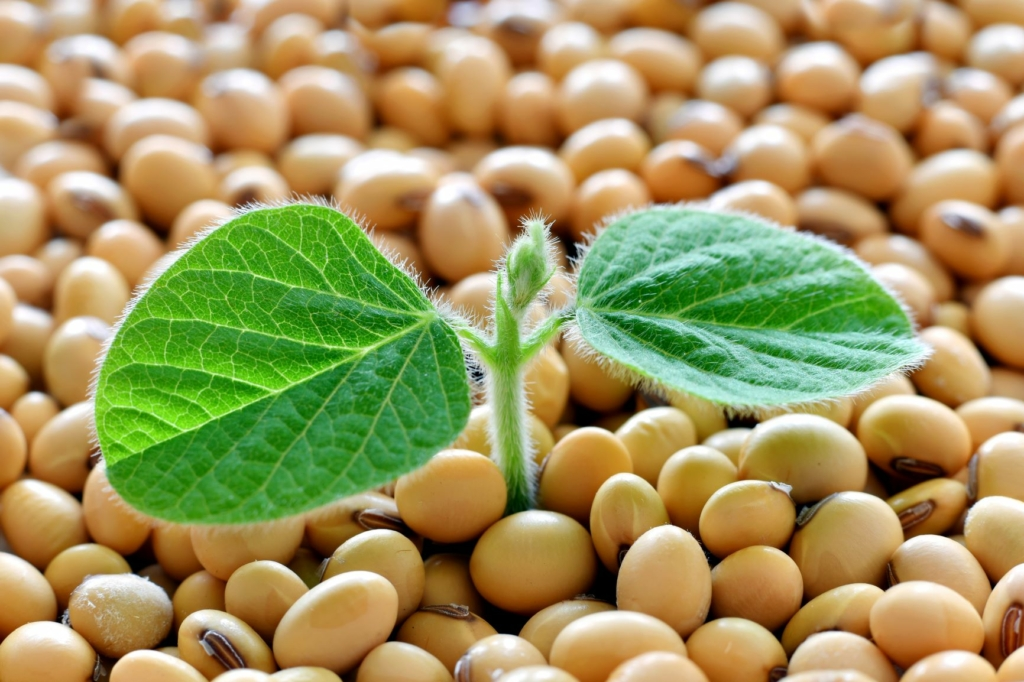 IBGE e Conab acreditam em safras recordes de vários grãos para 2021